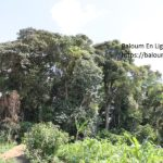 Forêt Sacré